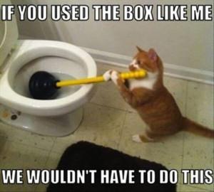 Cat unblocking a blocked toilet